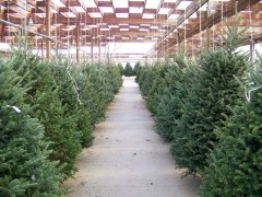 christmas-tree-lot-110661299979618wUf